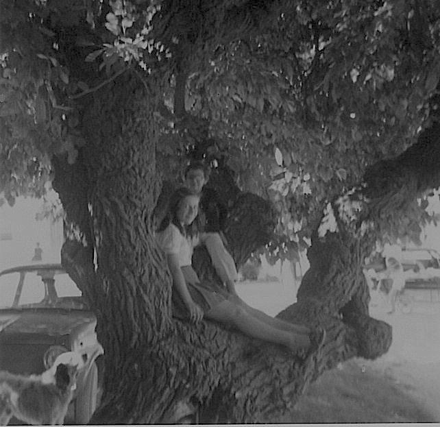 sull'albero**