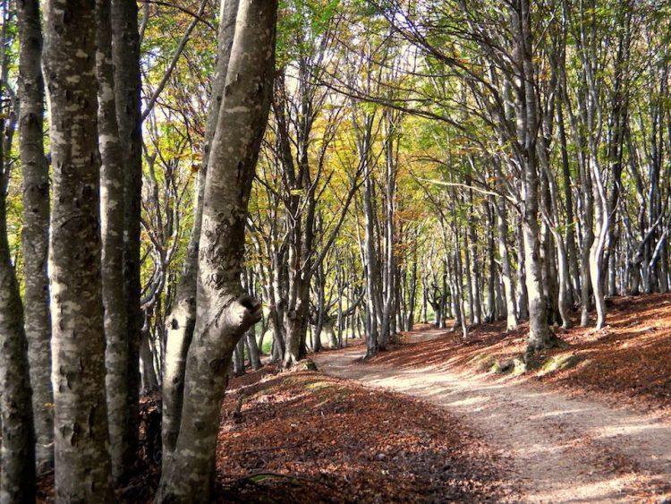 sentiero del Canfaìto