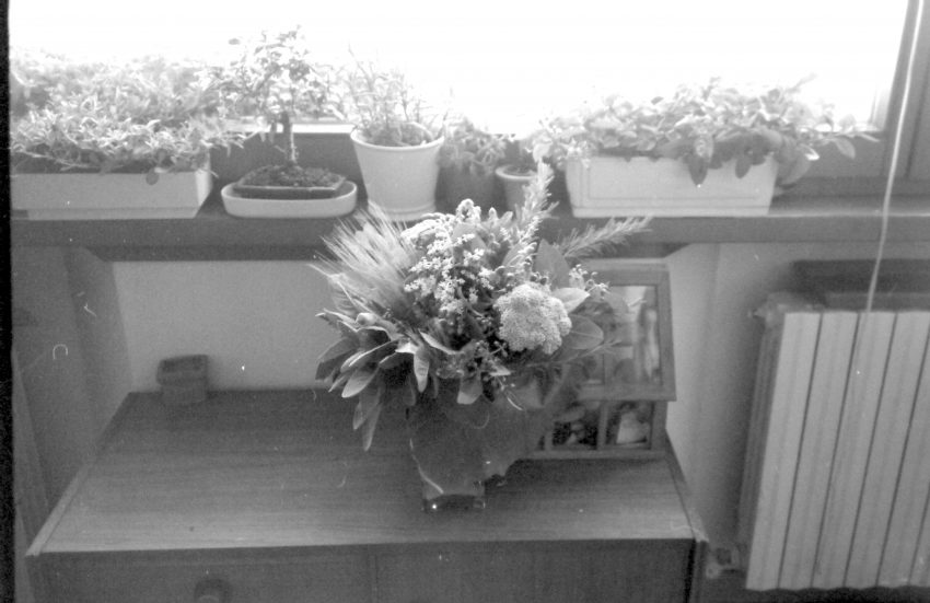 fiori per me 1