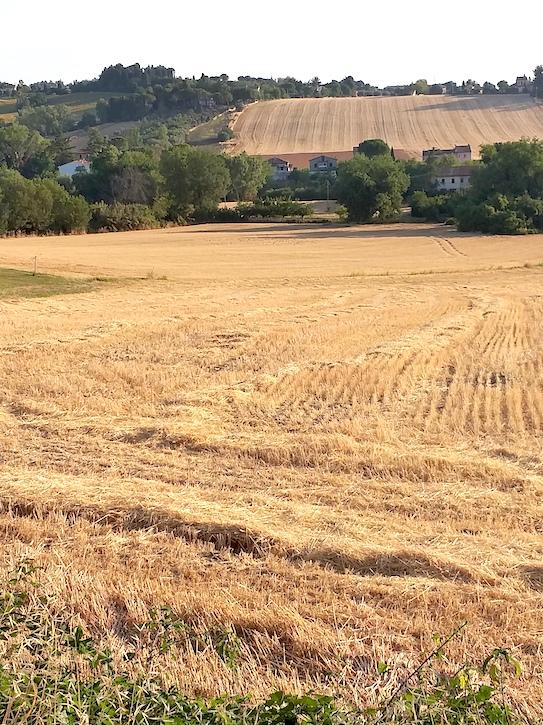 1 ieri c'era grano